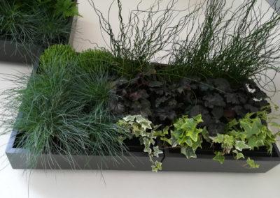 Déco-Pau-balcon-cadre-végétal-végétis-4